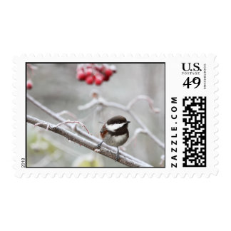 Chickadee and Red Berries in Winter Postage
