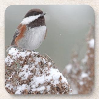 Chickadee apoyado castaña en la nieve posavasos de bebidas