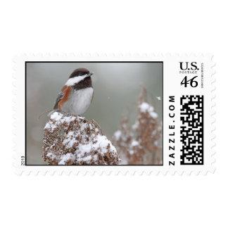 Chickadee apoyado castaña en la nieve