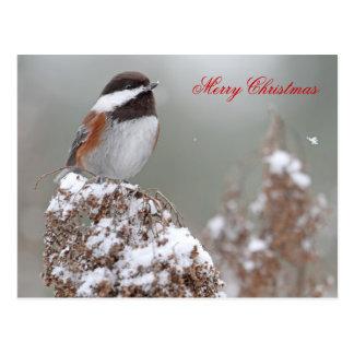 Chickadee apoyado castaña en la nieve tarjetas postales