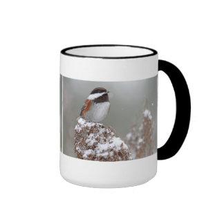 Chickadee apoyado castaña en la nieve tazas