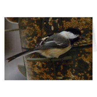 Chickadee At The Birdfeeder II Card