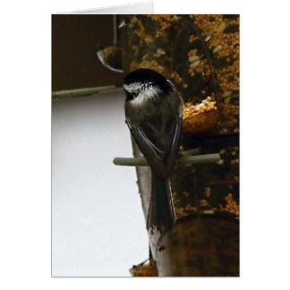 Chickadee At The Birdfeeder III Greeting Cards