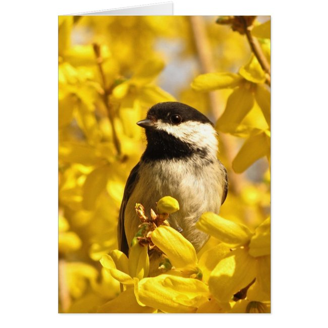 Chickadee Bird in Yellow Flowers Blank Card