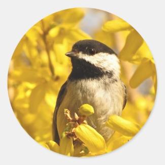 Chickadee Bird in Yellow Forsythia Flowers Sticker