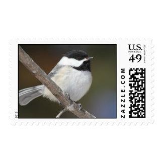 Chickadee Bird Stamp