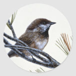 Chickadee boreal pegatinas redondas