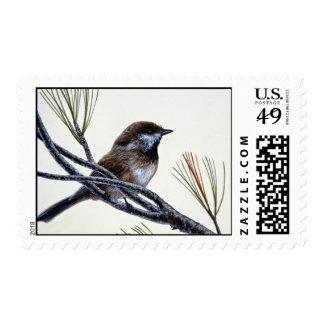 Chickadee boreal sello