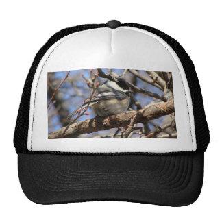Chickadee capsulado negro gorros