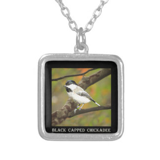 Chickadee capsulado negro (Maine y Massachusetts) Colgante Cuadrado