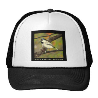 Chickadee capsulado negro (Maine y Massachusetts) Gorras