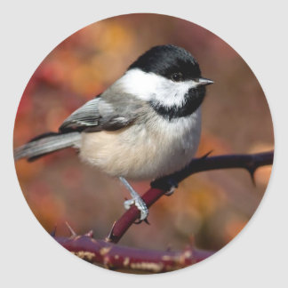 Chickadee Classic Round Sticker