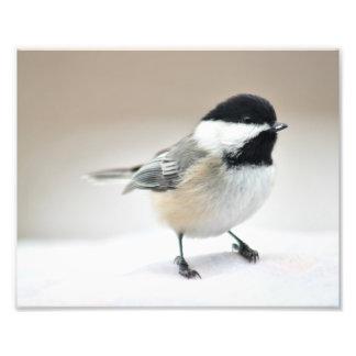 Chickadee close up photo print