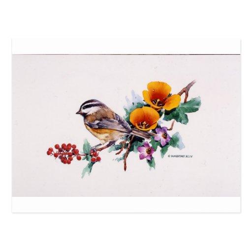 Chickadee de la montaña con las bayas postal