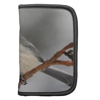 Chickadee de Maine