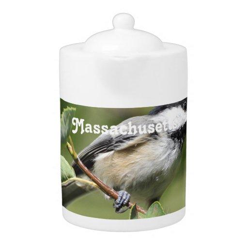 Chickadee de Massachusetts