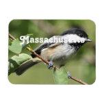 Chickadee de Massachusetts Imanes Rectangulares