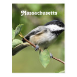 Chickadee de Massachusetts Tarjetas Postales
