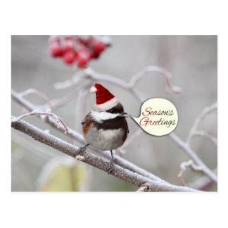 Chickadee del navidad tarjetas postales