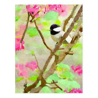 Chickadee en cerezo postal