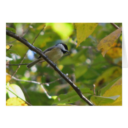 Chickadee en el árbol de Silverbell Tarjeta