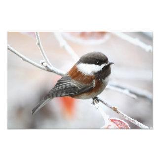 Chickadee en invierno arte con fotos