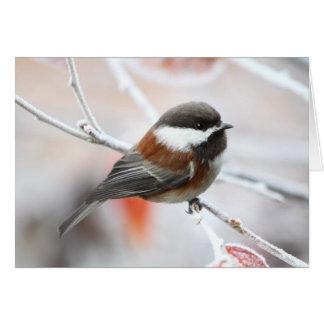 Chickadee en invierno tarjeta de felicitación