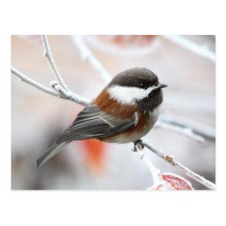 Chickadee en invierno tarjetas postales