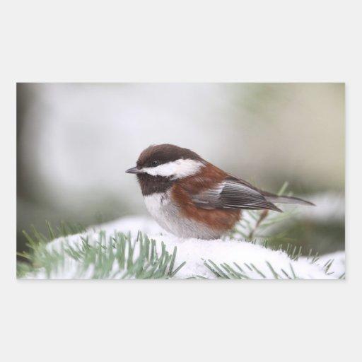 Chickadee en la nieve pegatina rectangular