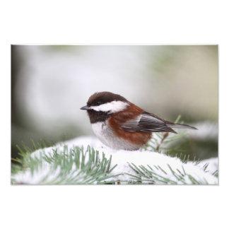 Chickadee en la nieve arte con fotos