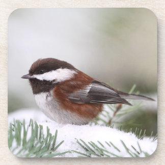 Chickadee en la nieve posavasos de bebidas