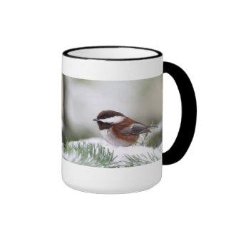 Chickadee en la nieve tazas de café