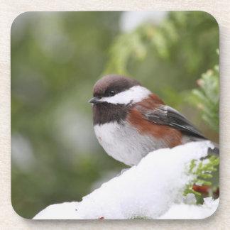 Chickadee en nieve en un árbol de cedro posavaso