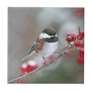 Chickadee en nieve que cae con las bayas rojas azulejo cuadrado pequeño