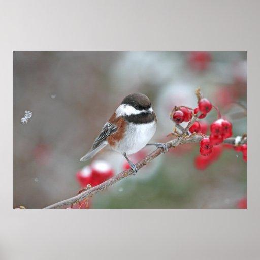 Chickadee en nieve que cae con las bayas rojas posters