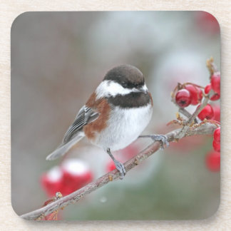 Chickadee en nieve que cae con las bayas rojas posavasos
