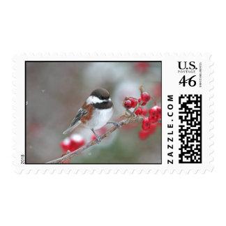 Chickadee en nieve que cae con las bayas rojas