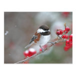 Chickadee en nieve que cae con las bayas rojas postal