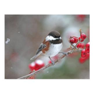 Chickadee en nieve que cae con las bayas rojas postales