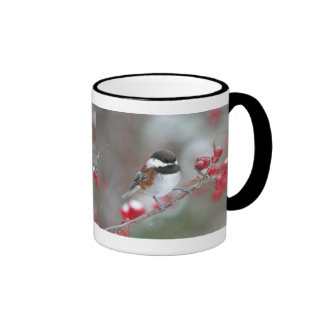Chickadee en nieve que cae con las bayas rojas tazas de café