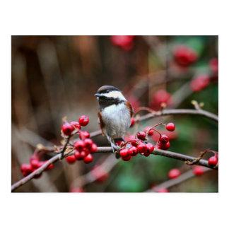 Chickadee en rama con las bayas rojas postal