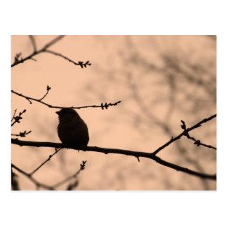 Chickadee en rama en la silueta crepuscular postales