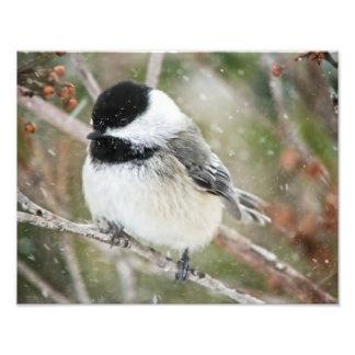 Chickadee en una nevada arte fotográfico