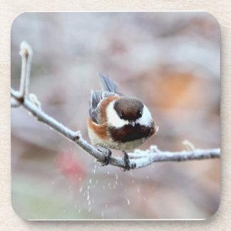 Chickadee en una rama de árbol escarchada posavasos