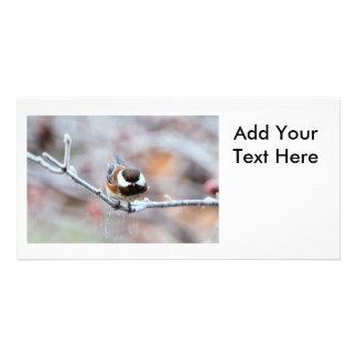 Chickadee en una rama de árbol escarchada tarjeta fotográfica personalizada
