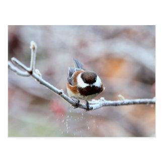 Chickadee en una rama de árbol escarchada postal