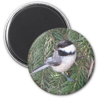 Chickadee in a pine tree magnet