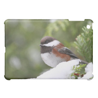 Chickadee in Snow on a Cedar Tree iPad Mini Covers