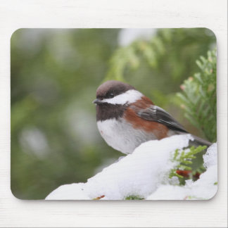 Chickadee in Snow on a Cedar Tree Mouse Pad
