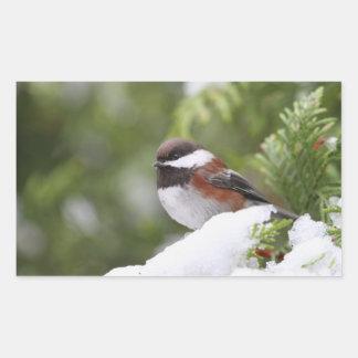 Chickadee in Snow on a Cedar Tree Rectangular Sticker